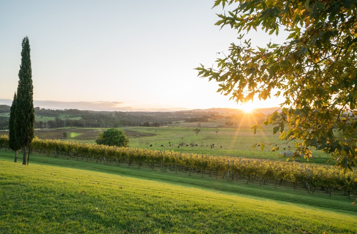 Sipping your way through the best wineries in the Mollymook region