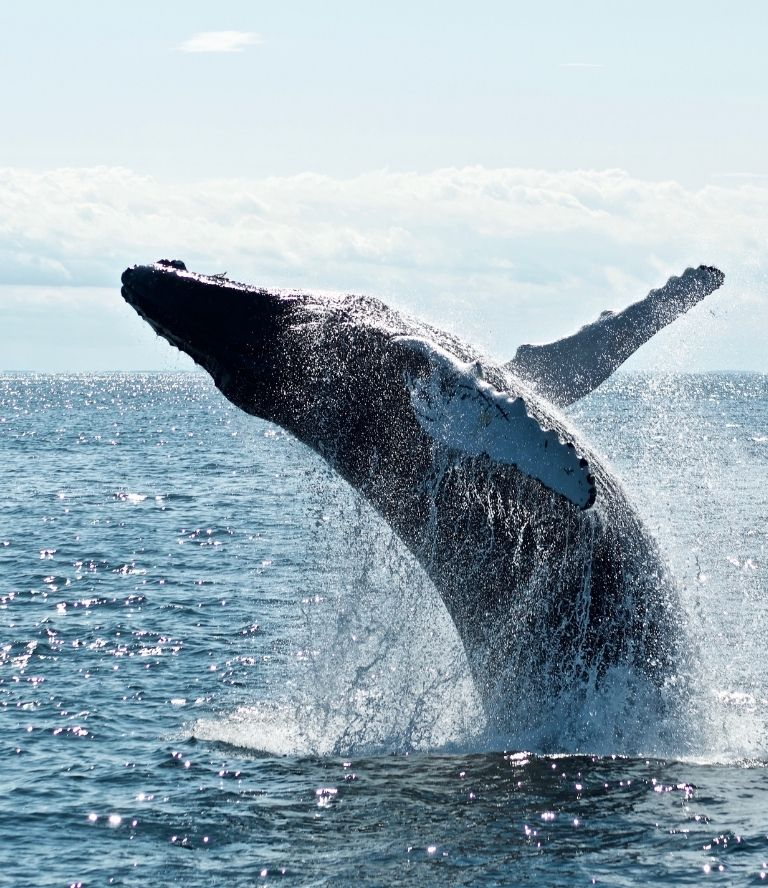 Top things to do in Port Stephens